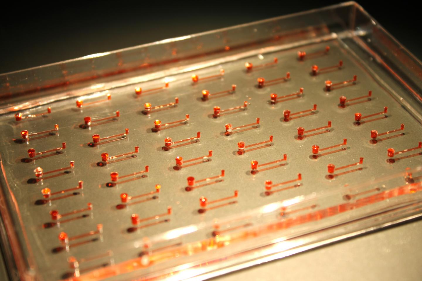This is a prototype of the new microfluidic device for hPSCs, consisting of narrow channels embedded in silicon rubber. [iCeMS/Kamei]