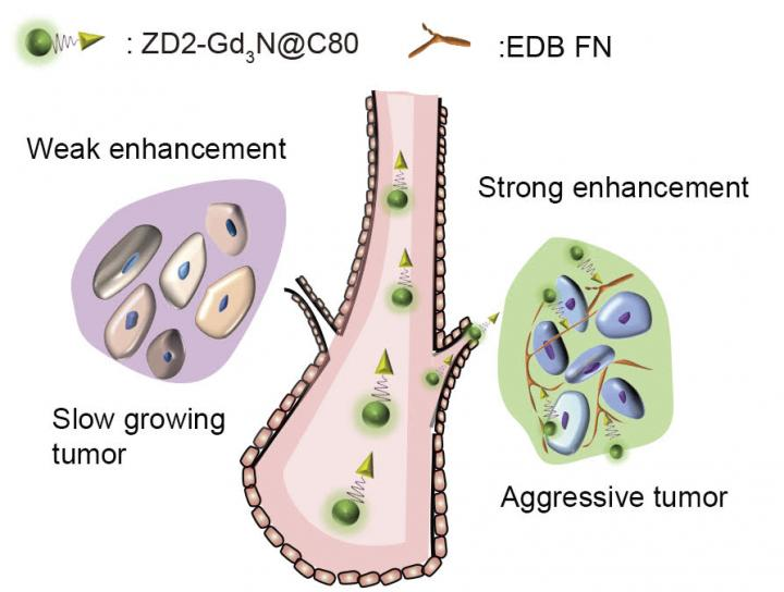 The targeted contrast agent ZD2-Gd3N@C80 binds to aggressive tumors and produces strong signal enhancement