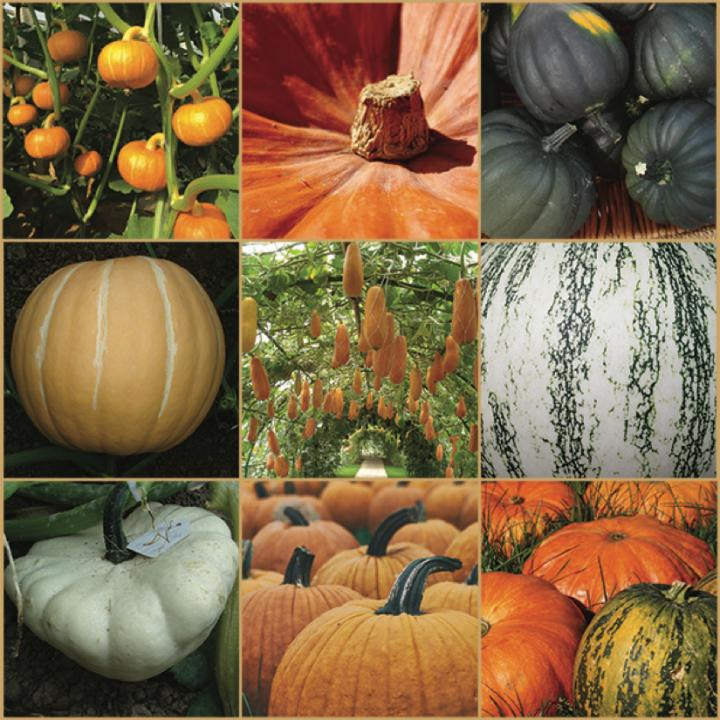 Pumpkin species from around the world. [Zhangjun Fei and Marissa Zuckerman]