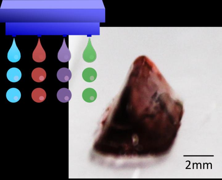 A 3D hydrogel construct obtained through drop-on-drop multimaterial bioprinting. [Credit: Osaka University]