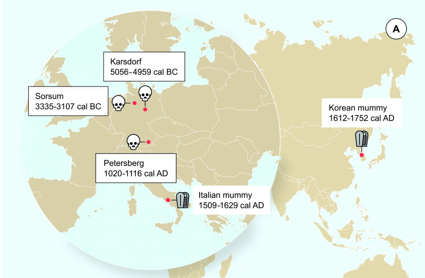 Geographic location of the samples from which ancient HBV genomes were recovered. Icons indicate the sample material (tooth or mummy). HBV genomes obtained in this study are indicated by black frames. [Krause-Kyora et al., eLife 2018]