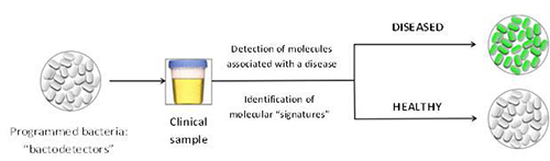 Principle for the use of modified bacteria as clinical diagnostic tool.[J. Bonnet/ Inserm.]