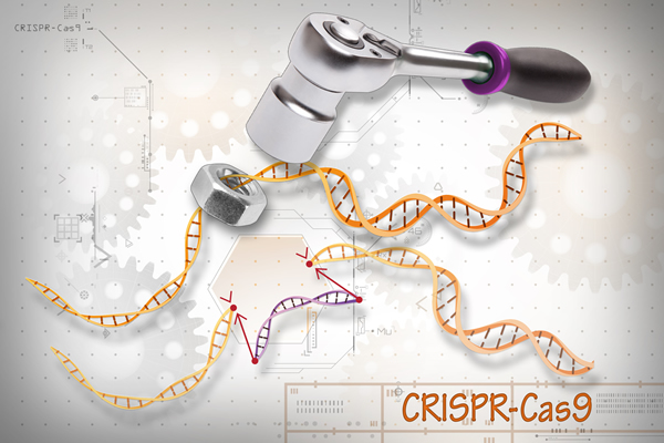 In a new study, scientists describe the molecular details of a new bacterial CRISPR system with dual nuclease activity. [Ernesto del Aguila III, NHGRI]