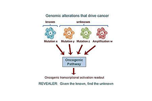 To better characterize the functional context of genomic variations in cancer, researchers developed a new computer algorithm called REVEALER. [UC San Diego Health]