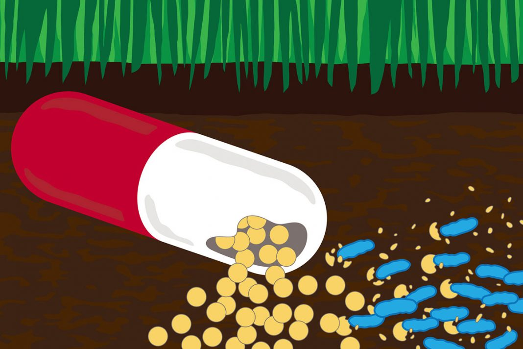 Antibiotics in the environment contribute to drug resistance. But researchers at Washington University School of Medicine in St. Louis have figured out how some soil bacteria turn the drugs into food. The information could lead to new ways to clean up antibiotic-contaminated soil and waterways. [Michael Worful]