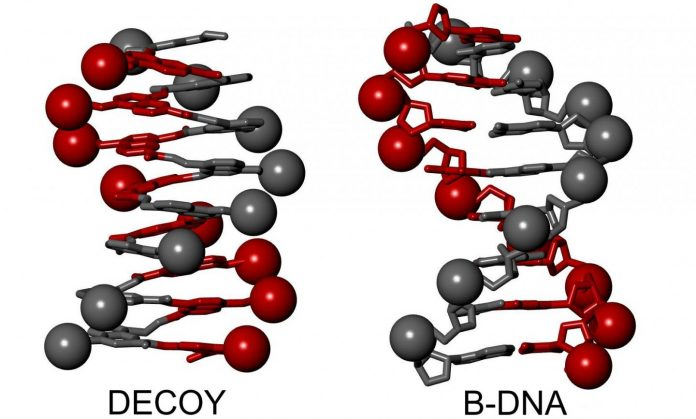 DNA-mimicking helical aromatic oligomers