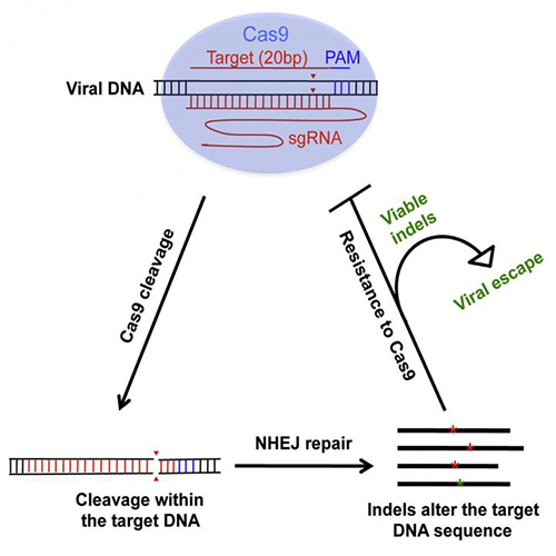 Hitting HIV with CRISPR/Cas9 Can Arouse Resistance