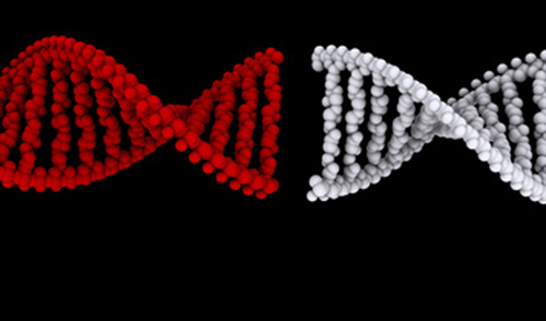 Small molecule inhibitor acted on mutated ETS transcription factors to reduce cell invasiveness and motility. [© Orlando Florin Rosu - Fotolia.com]