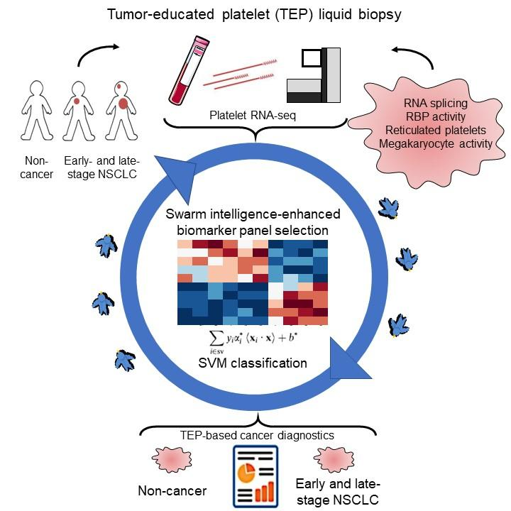 A blood-based biopsy called thromoboSeq can screen platelets for cancer-linked RNA. The platelets that contain such RNA are referred to as tumor-educated platelets. [Best et al.