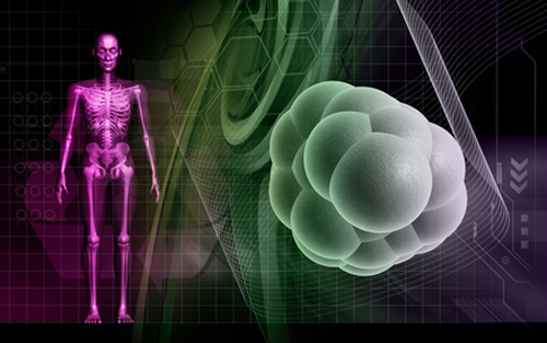 Results suggest FOXO1 controls SOX2 and OCT4 expression. [krishnacreations - Fotolia.com]