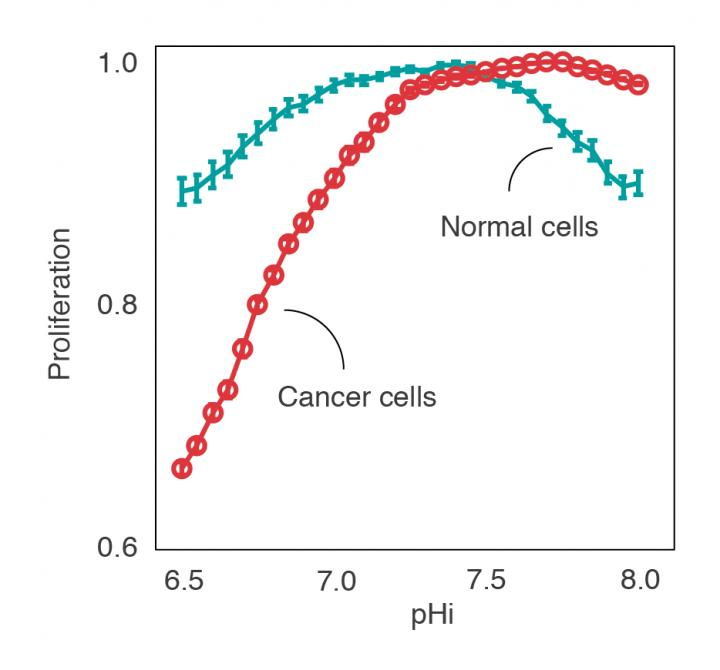 This is computational prediction of the proliferation of healthy and cancerous cells at different intracellular pH. Cancer cells proliferate well at basic pH, but at acidic pH they become vulnerable. [Miquel Duran-Frigola, IRB Barcelona]
