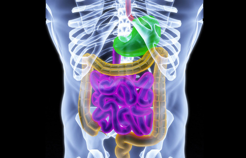 New Autism Treatment Could Come from Altering Gut Microbiota