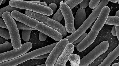 New way to treat bacteria