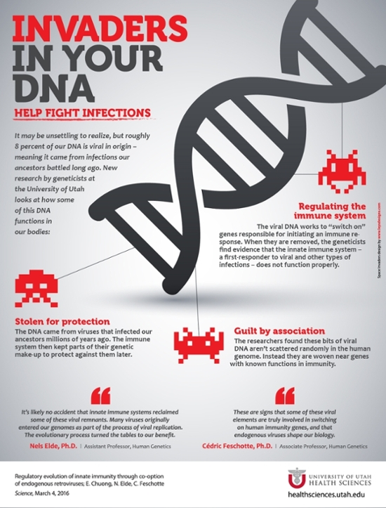 Viral invaders in our DNA help us fight infections.[University of Utah Health Sciences]