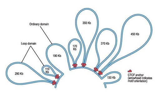 A 2.1 Mb region on chromosome 20 shows eight domains