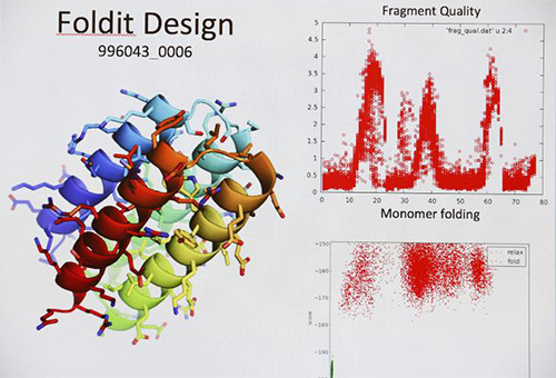 Volunteer citizen scientists around the world participate in research on protein structure prediction through the computer program Foldit. [Institute for Protein Design/University of Washington]