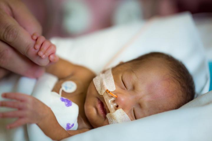 Preemie brains hold specialized cells in reserve that can repair brain injury suffered early in life, a research team led by Children's National Health System reports Dec. 19 in Nature Communications. [Children's National Health System]