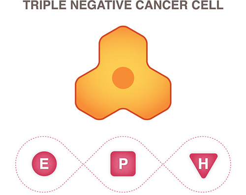 New research uncovers why attempts at blocking microRNAs for triple negative breast cancer often fail. [National Breast Cancer Foundation]