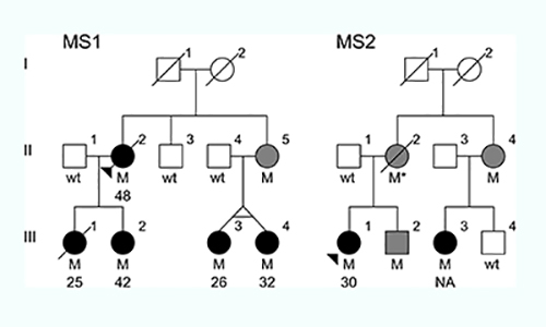 The family trees of the two families with the MS-causing mutation. (M) individuals with the mutation; (black circles) individuals with MS and age of disease onset; (gray circles or squares) individuals with the mutation whose health is unknown. [Carles Vilarino-Guell/University of British Columbia]