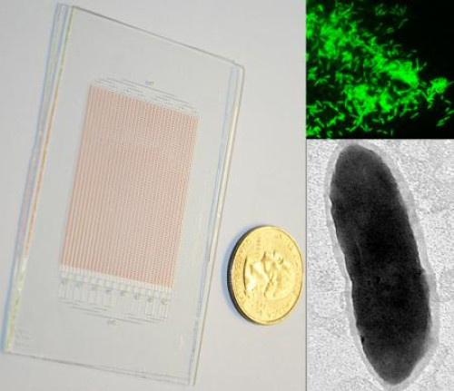 SlipChip for growing microbes (left). FISH image of the target organism (right