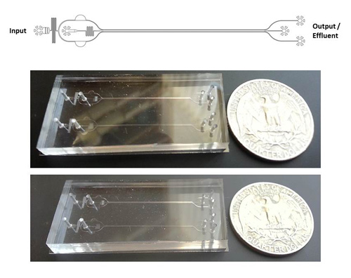 A microfluidic device that recapitulates bone marrow and blood vessel microenvironments shows promise as a platelet bioreactor. [Italiano Laboratory]