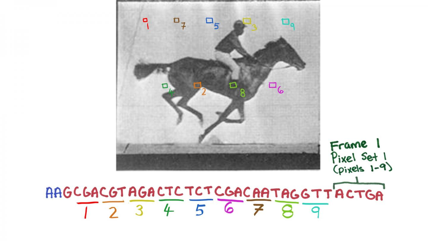 A new CRISPR system-based technology enables the recording of digital data, like those presenting successive frames of the movie of a galloping horse, one of the first made ever, in a population of living bacteria. In the future, this molecular recording device could allow researchers to have cells record the key changes they undergo during their development or exposure to environmental or pathogenic signals. [Wyss Institute at Harvard University]