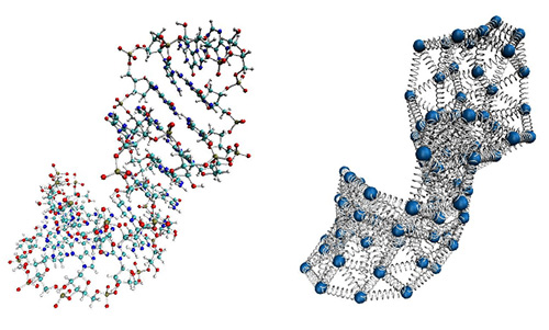 Using beads and springs to model the internal dynamics of RNA molecules provides results comparable to those obtained with complex, expensive, and time-consuming molecular dynamics techniques. [SISSA]