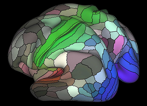 The researchers discovered that our brain's cortex, or outer mantle, is composed of 180 distinct areas per hemisphere. For example, the image above shows areas connected to the three main senses – hearing (red), touch (green) vision (blue) and opposing cognitive systems (light and dark). The map is based on data from resting state fMRI scans performed as part of the Human Connectome Project. [Matthew Glasser, Ph.D., and David Van Essen, Ph.D., Washington University]