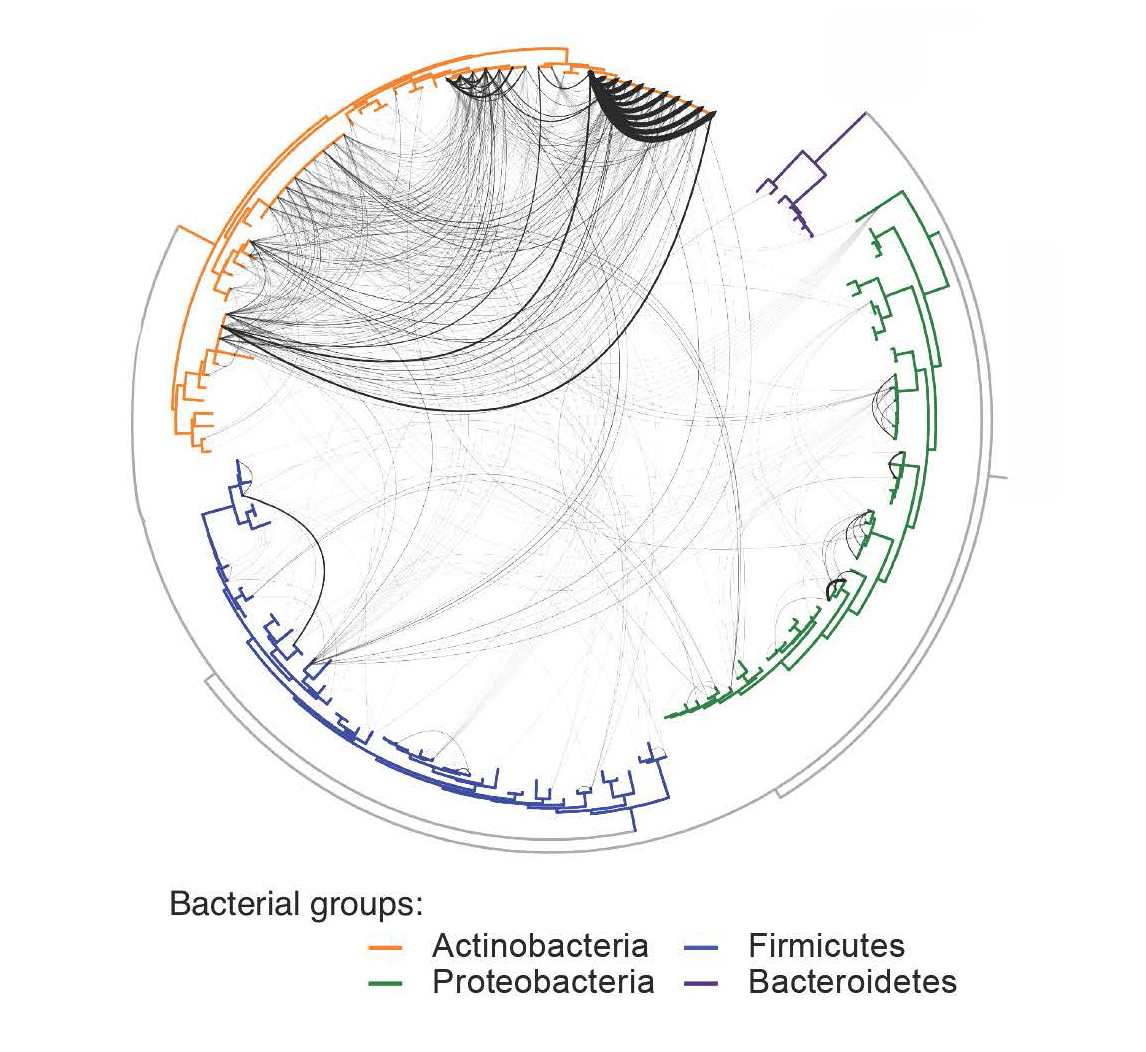 Graphic depiction of horizontal gene transfer analyzed in sample cheese bacteria, with the level of connection depicted through thickness of lines. [Rachel Dutton/UCSD]