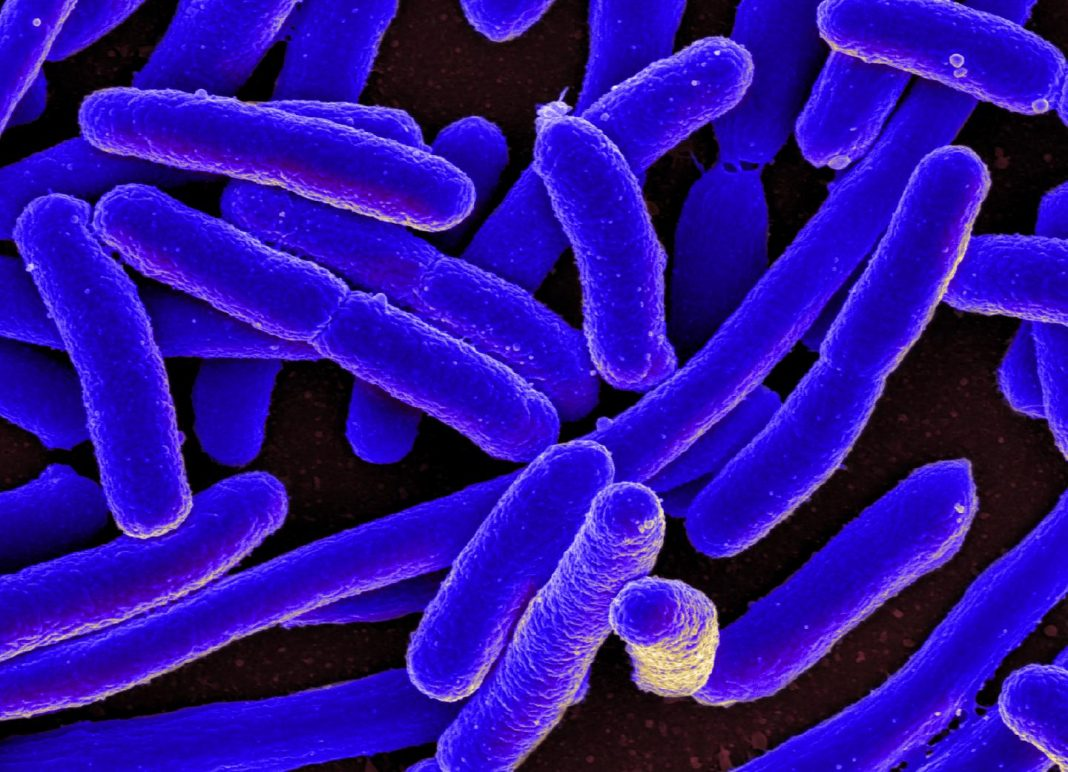 <i>E. coli</i> bacteria was used to study the sequences in DNA where the risk for mutation is significantly elevated. [National Institute of Allergy and Infectious Diseases]