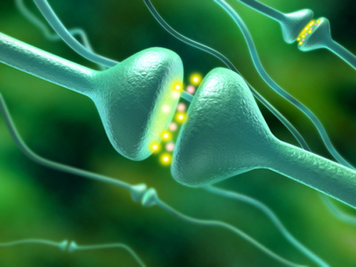 Optimized technology generates inhibitory as well as stimulatory mature neurons. [© Andrea Danti - Fotolia.com]