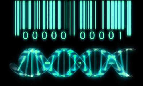 Firms are working to develop a commercial system based on DNA transistor technology. [© marc hericher - Fotolia.com]