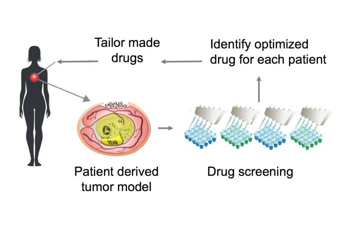 Researchers developed a faster and cheaper way to test cancer drugs to develop patient-specific treatments. [Kyoto University iCeMS]