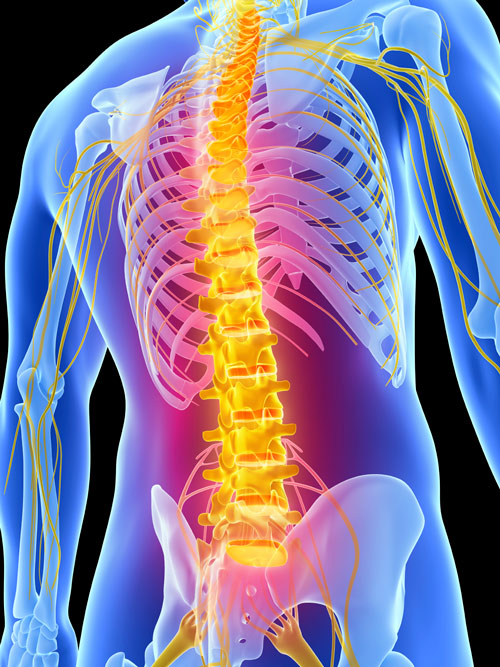 Potential Strategy Of Repairing Spinal Cord Injury With
