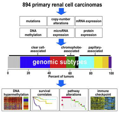 A comprehensive molecular analysis of 894 primary renal cell carcinomas resulted in nine subtypes defined by systematic analysis of five genomic data platforms. Each major histologic type represents substantial molecular diversity. Presumed actionable alterations include PI3K and immune checkpoint pathways. [Dr. Chad Creighton/Cell Reports]