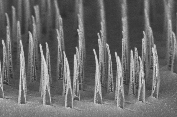 This image shows an array of nanospears before being released for delivery of genetic information to cells. [UCLA Broad Stem Cell Research Center/ACS Nano]
