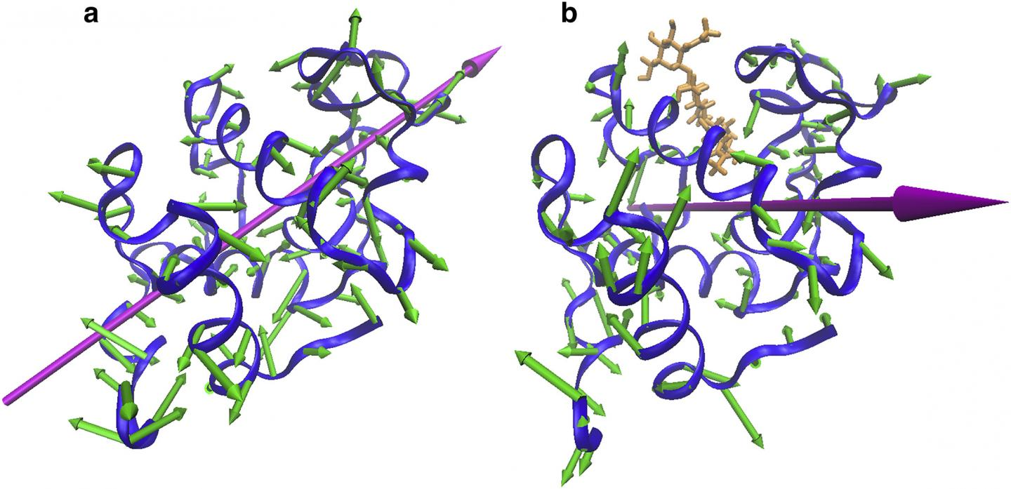 An illustration of the different ways in which proteins vibrate: (a) proteins in a clamping motion; (b) proteins in a twisting motion. [Reprinted with permission of Biophysical Journal]