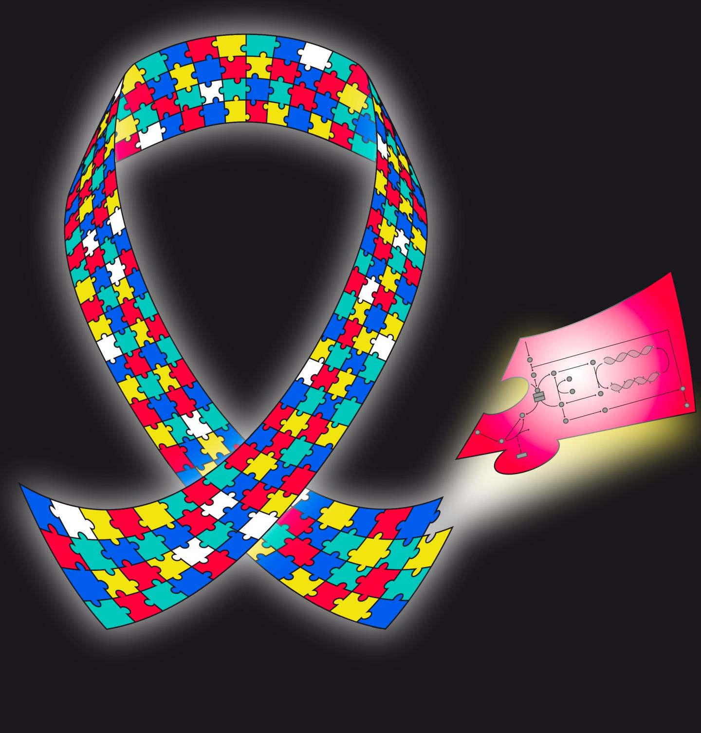 The autism awareness ribbon symbolizes the diverse experiences of people and families living with ASD. Here, it also represents the various genetic and environmental effects on the pathophysiology of ASD. The white pieces represent currently unknown effects. However, the red piece illustrating folate-dependent one-carbon metabolism and transsulfuration contributes important information to our knowledge of ASD. [Daniel P. Howsmon/CCBY]