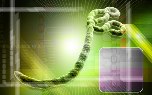 Joins with U.S. Army Medical Research Institute of Infectious Diseases to develop vaccine against Ebola