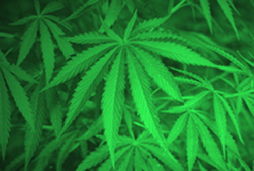Urine samples showed traces of a metabolite of THC in 16% of children tested. [NIH]