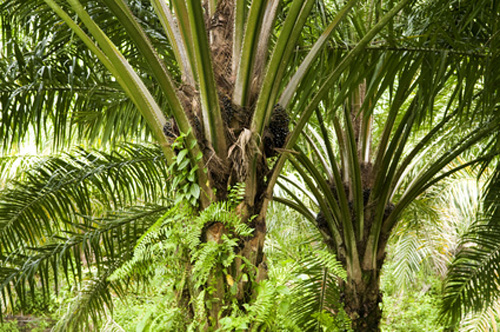 Firm's microbial technology will be used to help advance country's palm-oil industry.