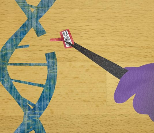 MAGESTIC makes gene editing with barcodes more like a word processor