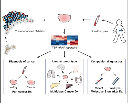 Using platelet RNA, scientists have been able to detect the presence of cancer and pinpoint its primary location. [Best et al., 2015, Cancer Cell 28, 1–11]
