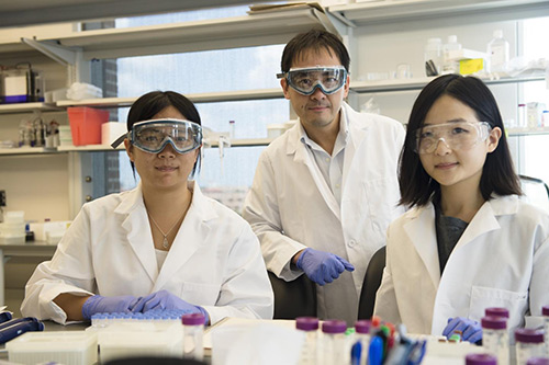 Rice University researchers (from left) Lucia Wu, David Zhang and J. Sherry Wang developed a continuously tunable method to quantify biomarkers in DNA and RNA. Finding biomarkers is important for the detection of diseases and the design of therapies. [Jeff Fitlow/Rice University]