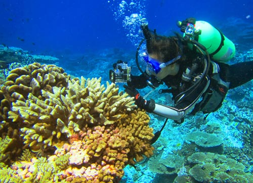 San Diego State University graduate student Yan Wei Lim explores coral reefs in the southern Line Islands. [Rob Edwards