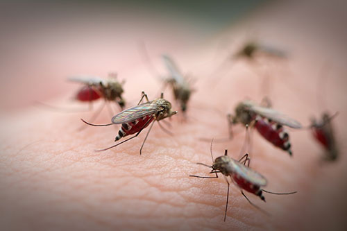 Researchers have identified a patient in Haiti with a serious mosquito-borne illness that has never before been reported in the Caribbean nation. [mycteria/Getty Images]