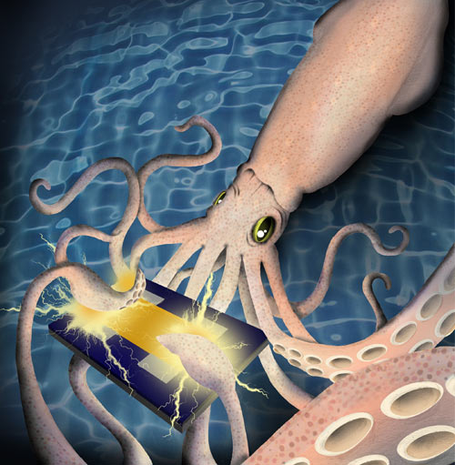 A protein in squid skin called reflectin has been found to conduct positive electrical charges. The discovery may lead to medical devices that communicate more directly with human tissues. [Matt Woodworth]