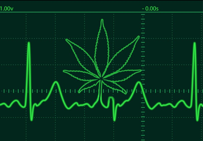 New study shows that marijuana use is associated with a three-fold risk of death from hypertension. [NIH]