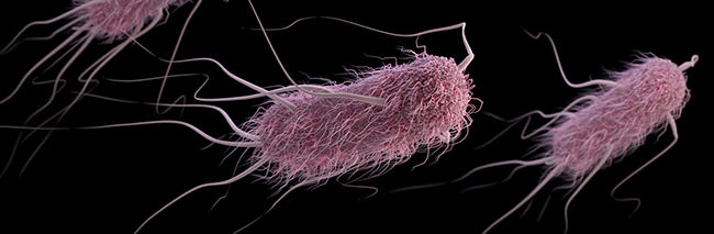 Targeting the filamentous anchors of bacteria may be a way to treat dangerous infections and circumvent antibiotic resistance mechanisms. [CDC]