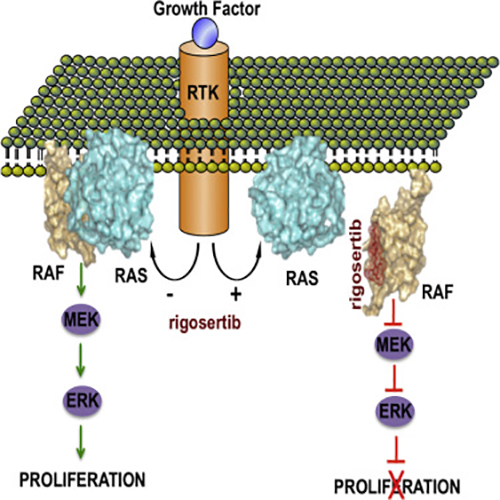 Mechanism of new research targeting previously undruggable RAS gene. [Cell, Volume 165, 21 April 2016]